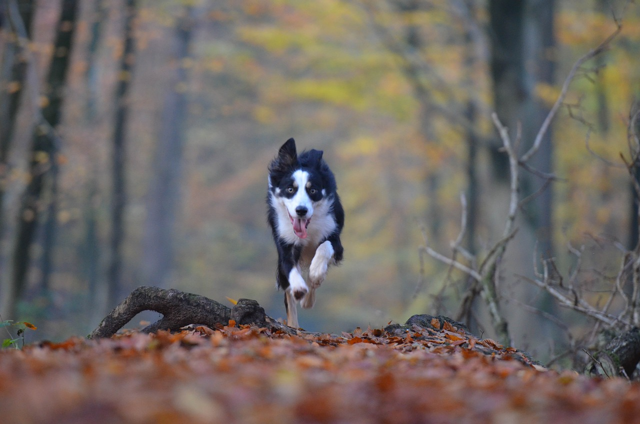 Clean Air for Your Pets