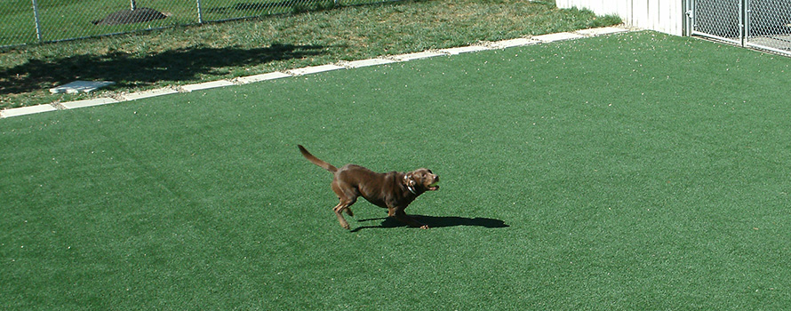 Pups Enjoy the Benefits of Artificial Turf